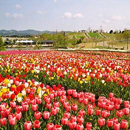 新潟でプロポーズ 越後丘陵公園