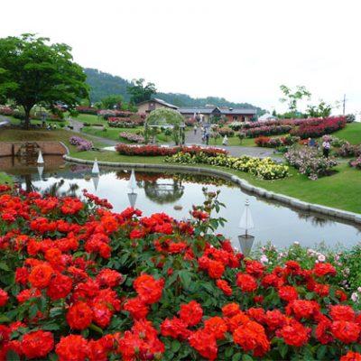多くの種類の薔薇を楽しむことができる東沢バラ公園でお花にかこまれプロポーズ!