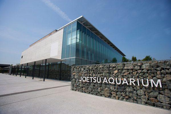 新潟でプロポーズ 上越市立水族博物館 うみがたり
