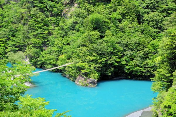 新潟でプロポーズ 寸又峡 夢の吊橋