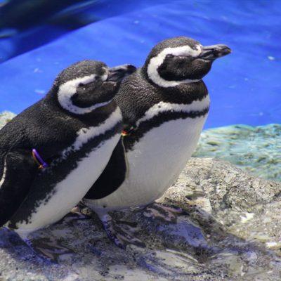 定番水族館デートはすみだ水族館でロマンチックなプロポーズ