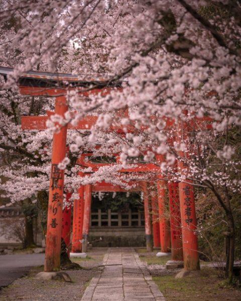 新潟花嫁に人気の結婚指輪、「和」の京都の桜モチーフにわかエンゲージリング