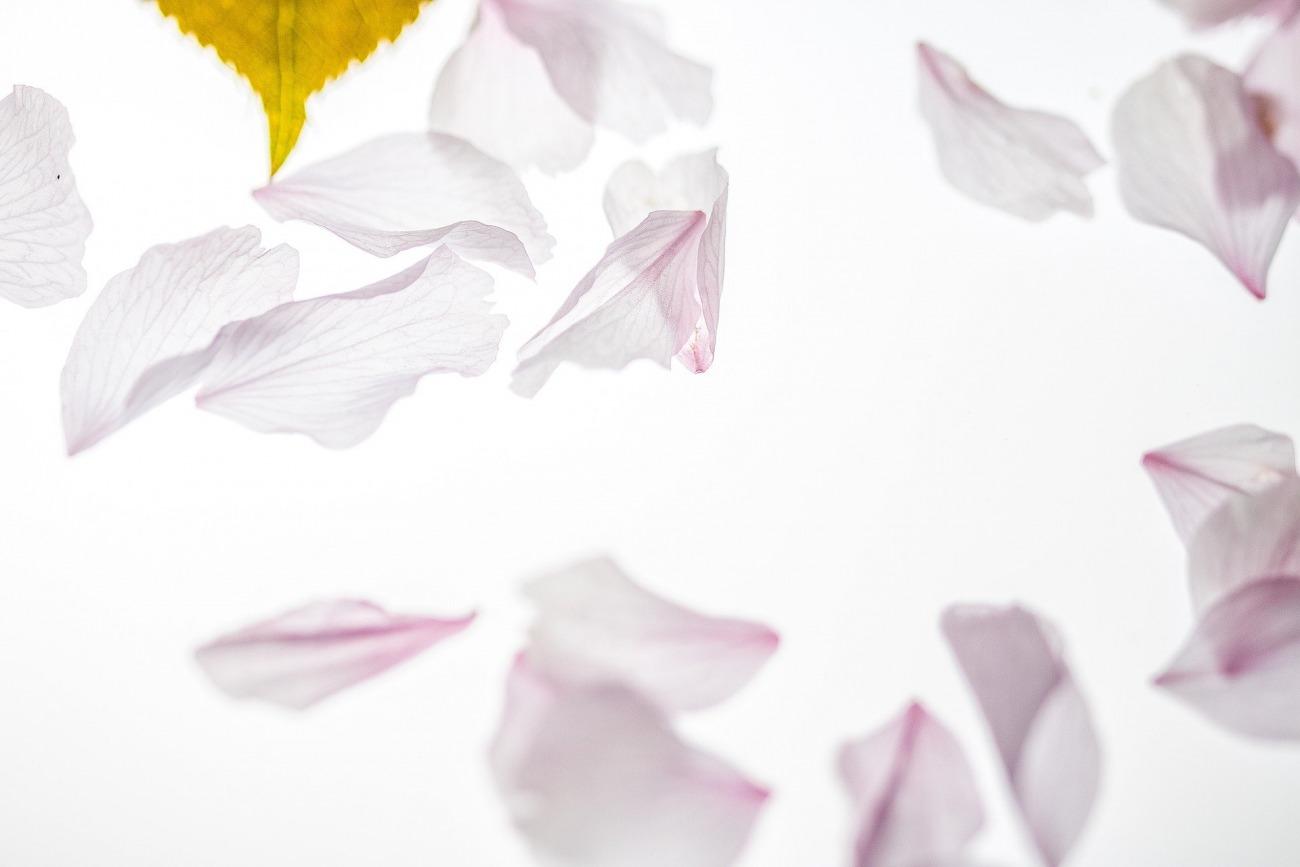 新潟 BROOCH【俄 にわか】 | NIWAKAの初桜(ういざくら)の婚約指輪と結婚指輪のセットリング